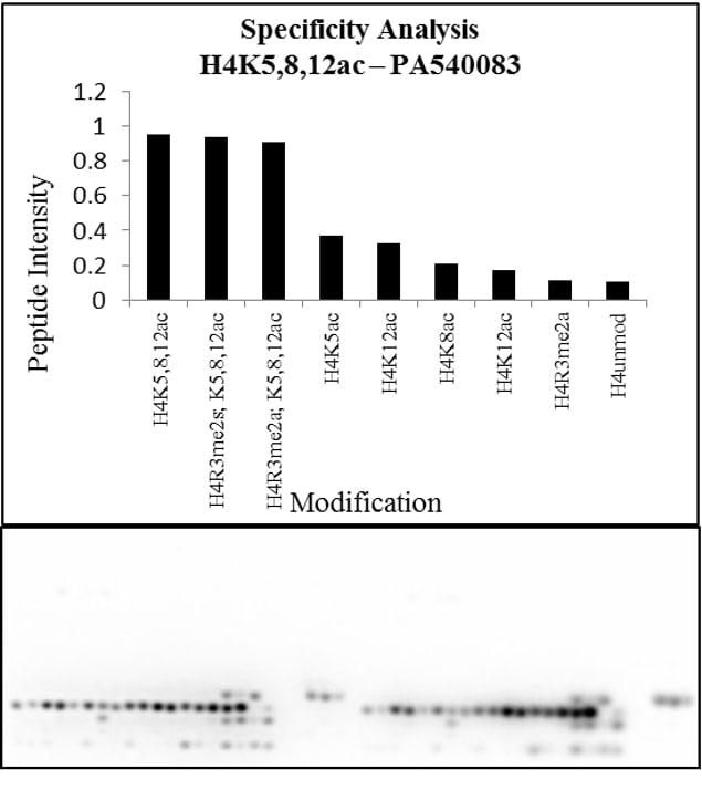 H4ac pan-acetyl (K5,K8,K12) Antibody in Peptide array (Array)
