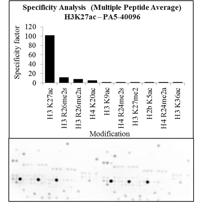 Acetyl-Histone H3 (Lys27) Antibody in Peptide Array (Array)