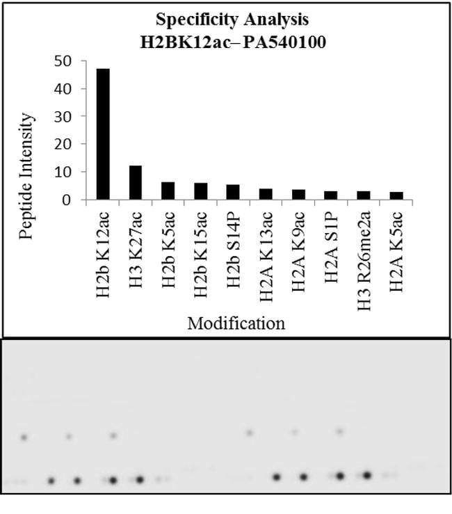 H2BK12ac Antibody in Peptide array