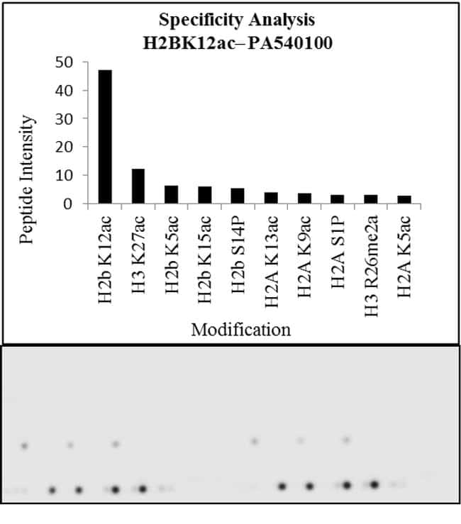 H2BK12ac Antibody in Peptide array (ARRAY)