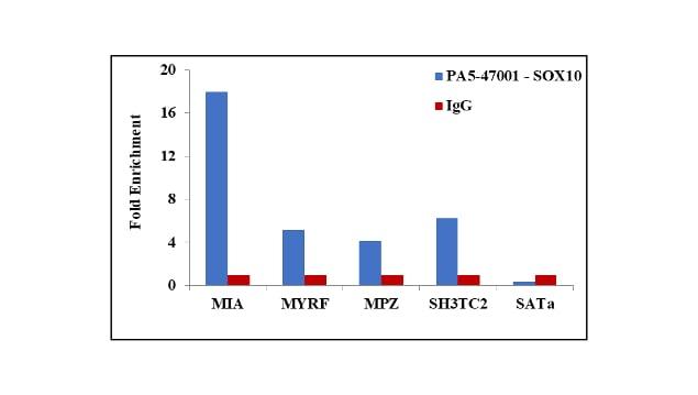 SOX10 Antibody in ChIP assay (ChIP)