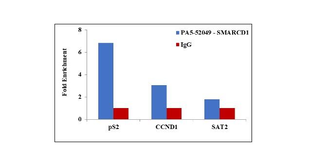 SMARCD1 Antibody in ChIP assay (ChIP)
