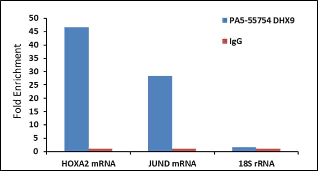 DHX9 Antibody in RNA Immunoprecipitation (RIP)