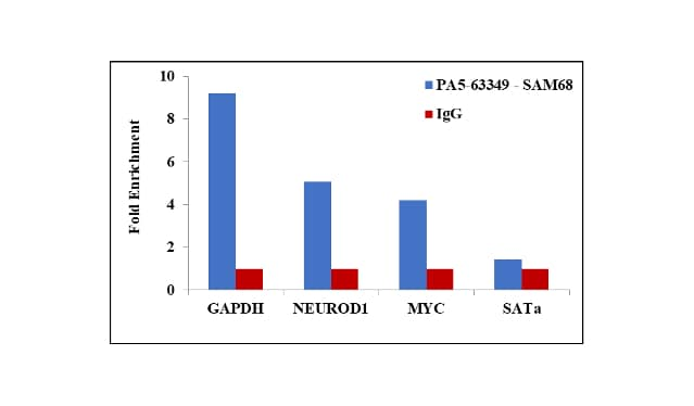 SAM68 Antibody in ChIP assay (ChIP)