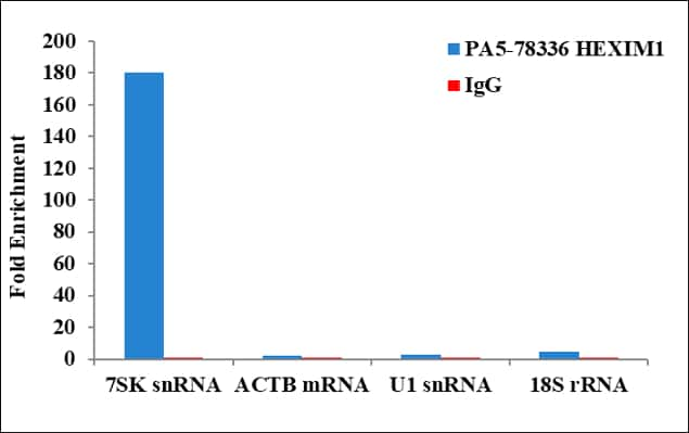HEXIM1 Antibody in RNA Immunoprecipitation (RIP)