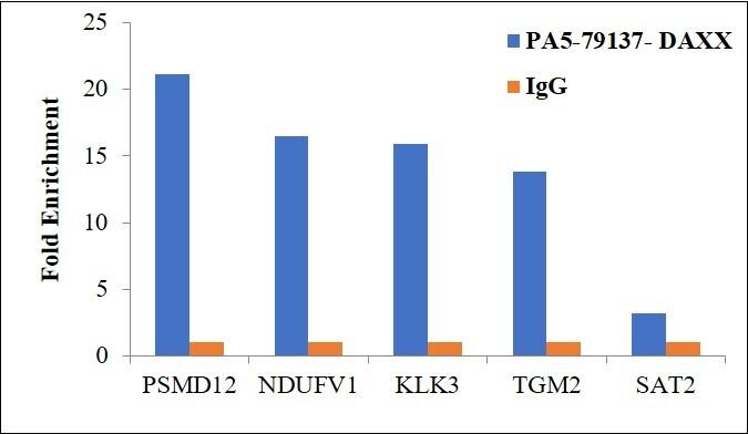 DAXX Antibody in ChIP assay (ChIP)