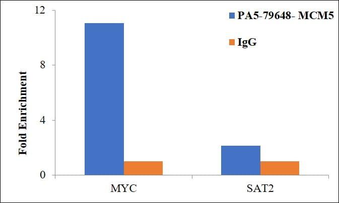 MCM5 Antibody in ChIP assay (ChIP)