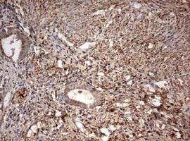 PARN Antibody in Immunohistochemistry (Paraffin) (IHC (P))