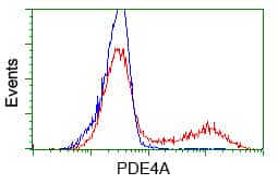 PDE4A Antibody in Flow Cytometry (Flow)