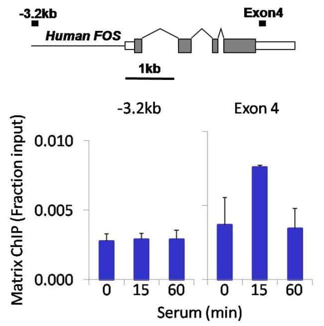 PDGFRA Antibody in ChIP assay (ChIP)