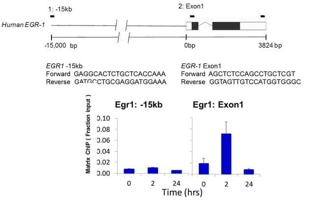 PIM1 Antibody in ChIP assay (ChIP)