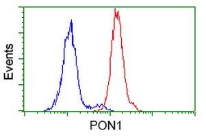 PON1 Antibody in Flow Cytometry (Flow)