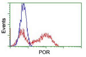 POR Antibody in Flow Cytometry (Flow)