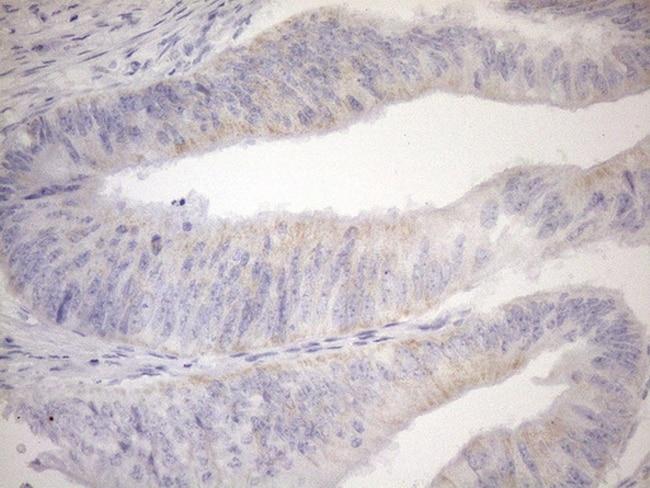 PPIF Antibody in Immunohistochemistry (Paraffin) (IHC (P))
