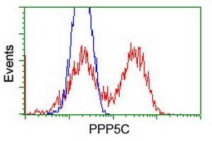 PPP5C Antibody in Flow Cytometry (Flow)