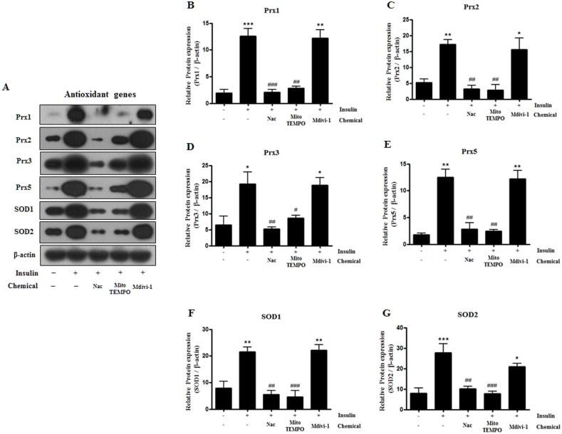 PRDX2 Antibody