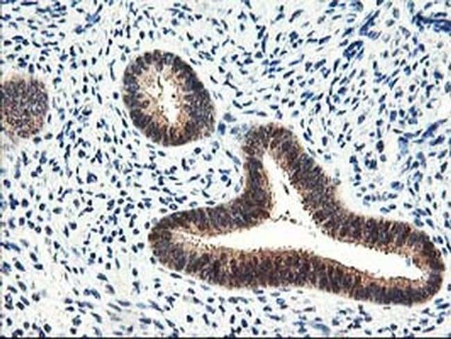 PRMT2 Antibody in Immunohistochemistry (Paraffin) (IHC (P))