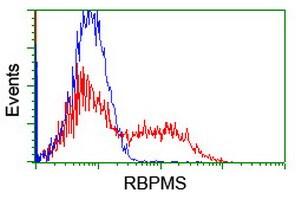 RBPMS Antibody in Flow Cytometry (Flow)