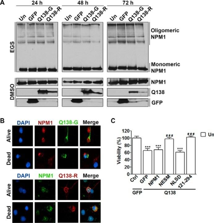 RFP Antibody