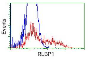 RLBP1 Antibody in Flow Cytometry (Flow)