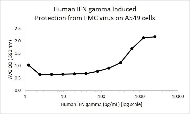 Human IFN gamma Antibody in Control (Ctrl)
