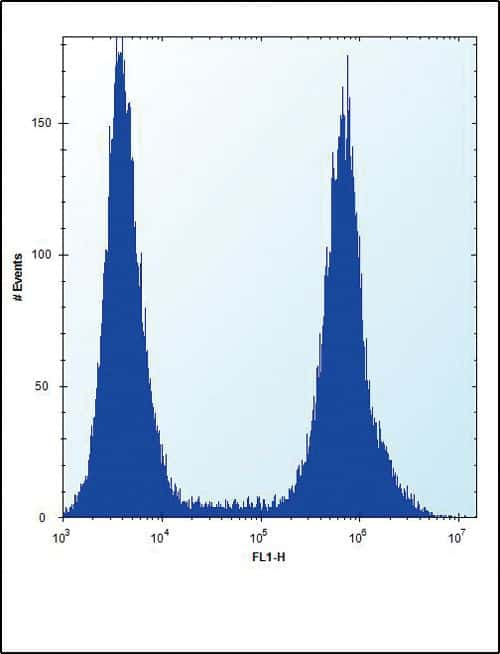 RUNX1 Antibody in Flow Cytometry (Flow)