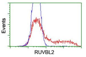 RUVBL2 Antibody in Flow Cytometry (Flow)