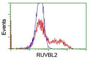 RUVBL2 Antibody in Flow Cytometry (Flow)