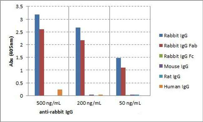Rabbit IgG Fab Secondary Antibody in ELISA (ELISA)