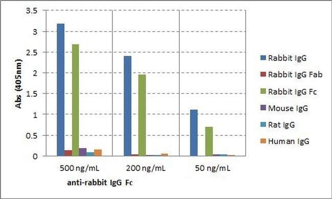 Rabbit IgG Fc Secondary Antibody in ELISA (ELISA)