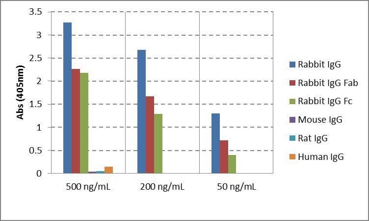 Rabbit IgG Secondary Antibody in ELISA (ELISA)