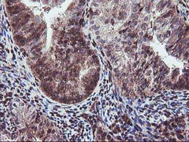 SETD7 Antibody in Immunohistochemistry (Paraffin) (IHC (P))