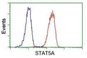 STAT5A Antibody in Flow Cytometry (Flow)