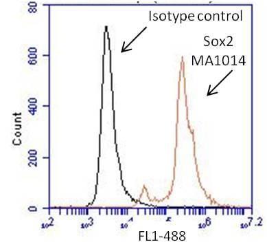 SOX2 Antibody in Flow Cytometry (Flow)