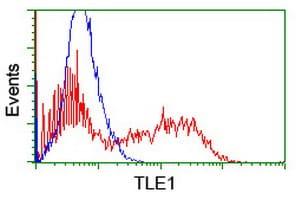 TLE1 Antibody in Flow Cytometry (Flow)