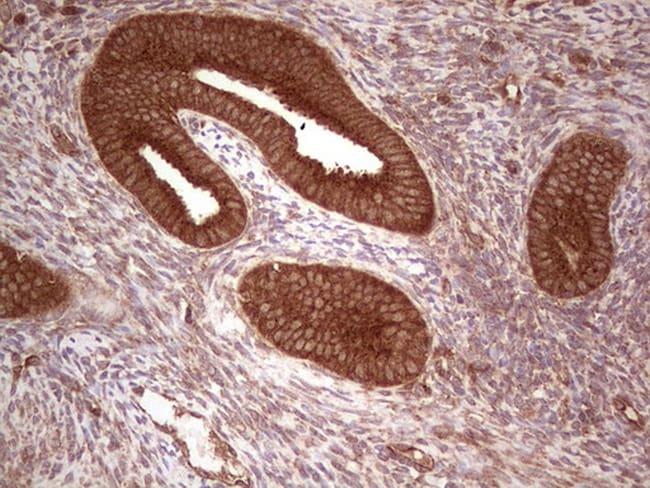 UBE2D2 Antibody in Immunohistochemistry (Paraffin) (IHC (P))