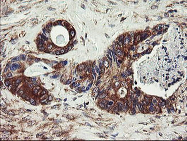 UBE2J1 Antibody in Immunohistochemistry (Paraffin) (IHC (P))
