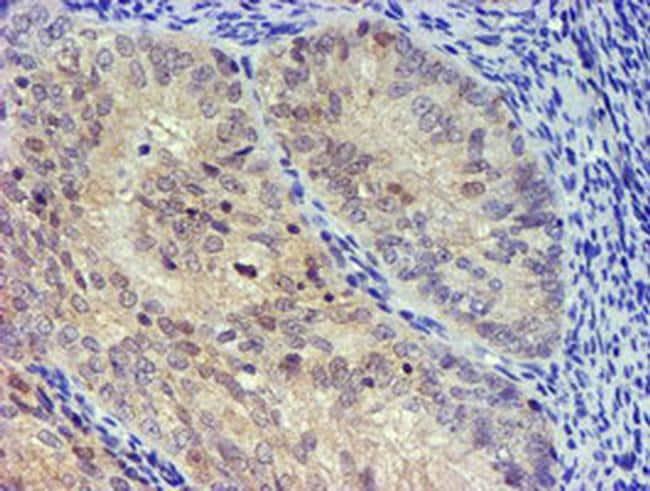 UBXN2B Antibody in Immunohistochemistry (Paraffin) (IHC (P))