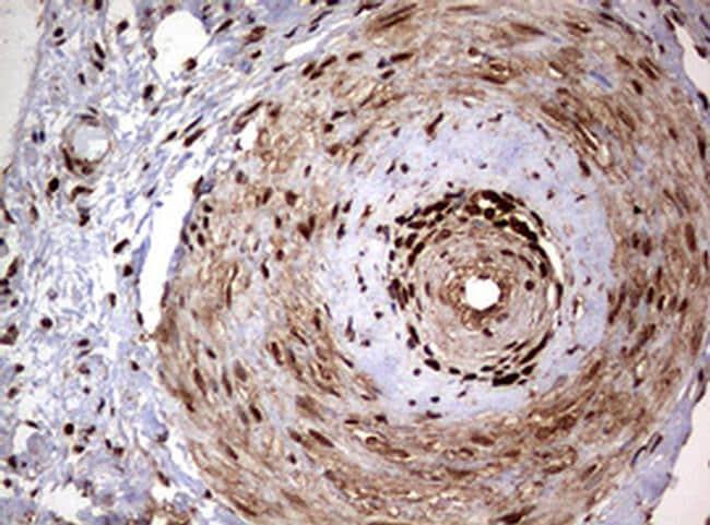 USP44 Antibody in Immunohistochemistry (Paraffin) (IHC (P))