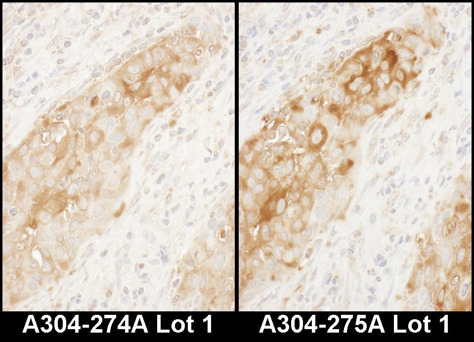 WARS Antibody in Immunohistochemistry (IHC)