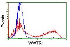WWTR1 Antibody in Flow Cytometry (Flow)