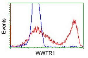 WWTR1 Antibody in Flow Cytometry (Flow)