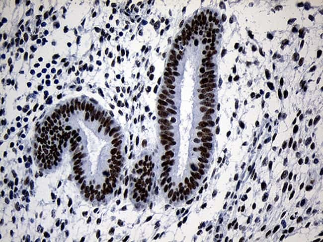 ZNF670 Antibody in Immunohistochemistry (Paraffin) (IHC (P))