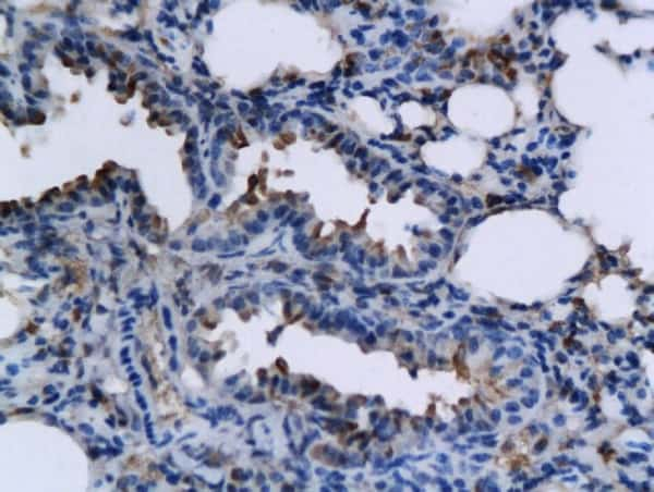 TNFSF15 Antibody in Immunohistochemistry (Paraffin) (IHC (P))
