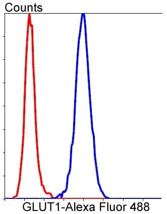 Glucose Transporter GLUT1 Antibody in Flow Cytometry (Flow)