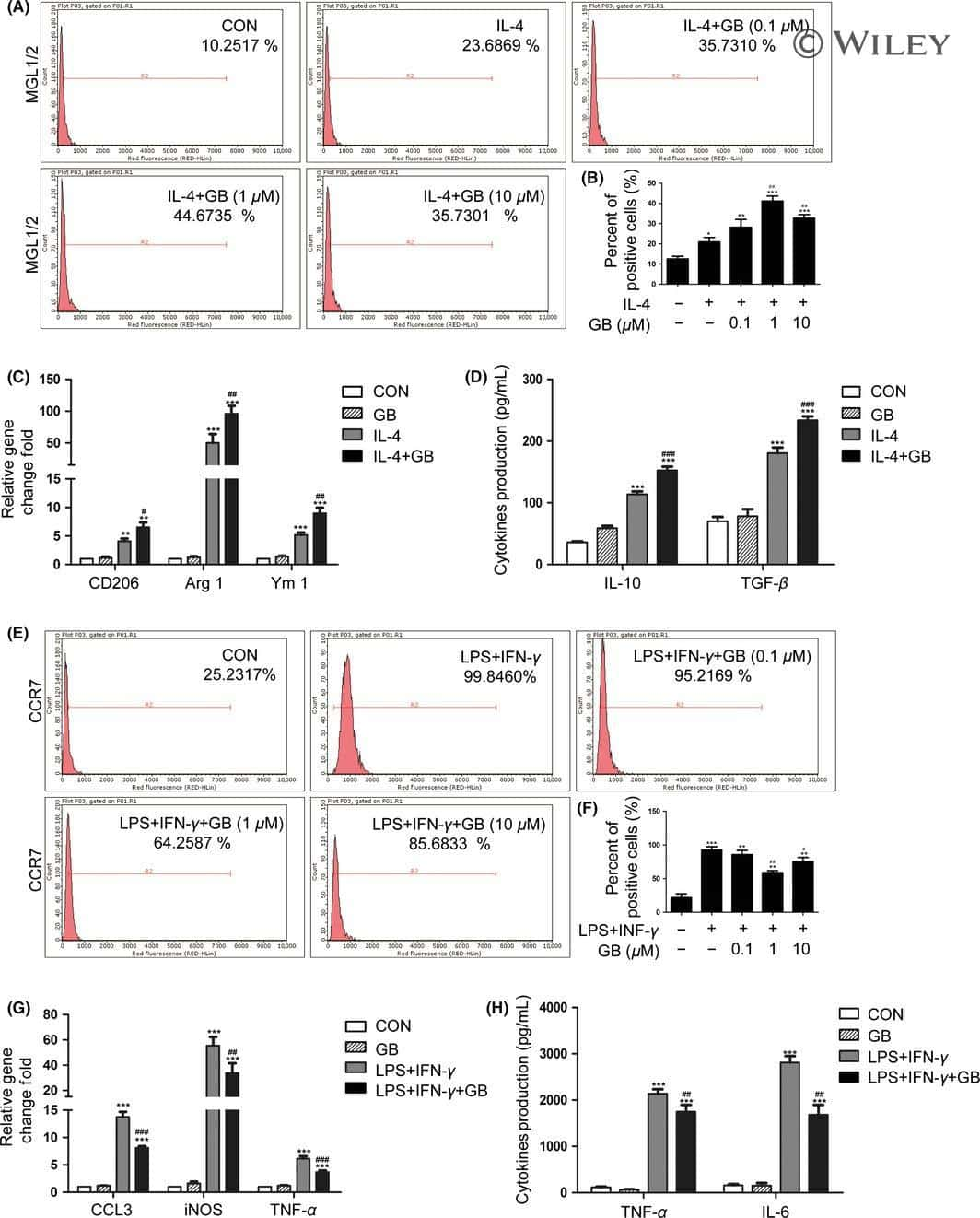 CD197 (CCR7) Antibody