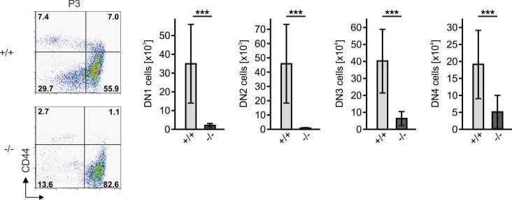 TCR beta Antibody