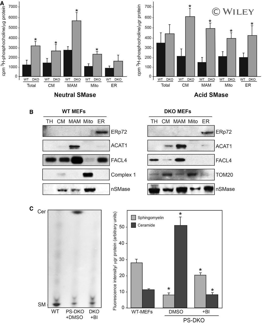 SMPD2 Antibody