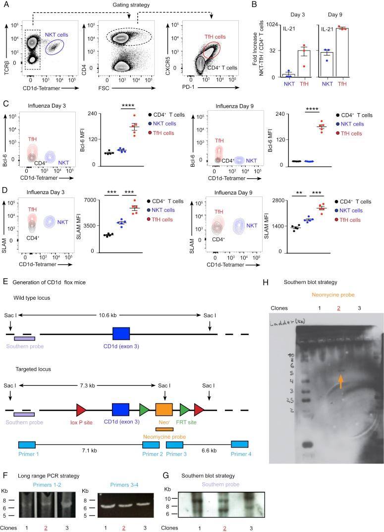 CD279 (PD-1) Antibody