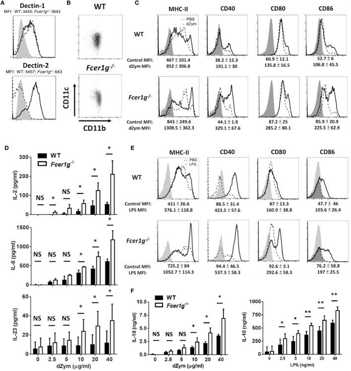 MHC Class II I-Ab Antibody